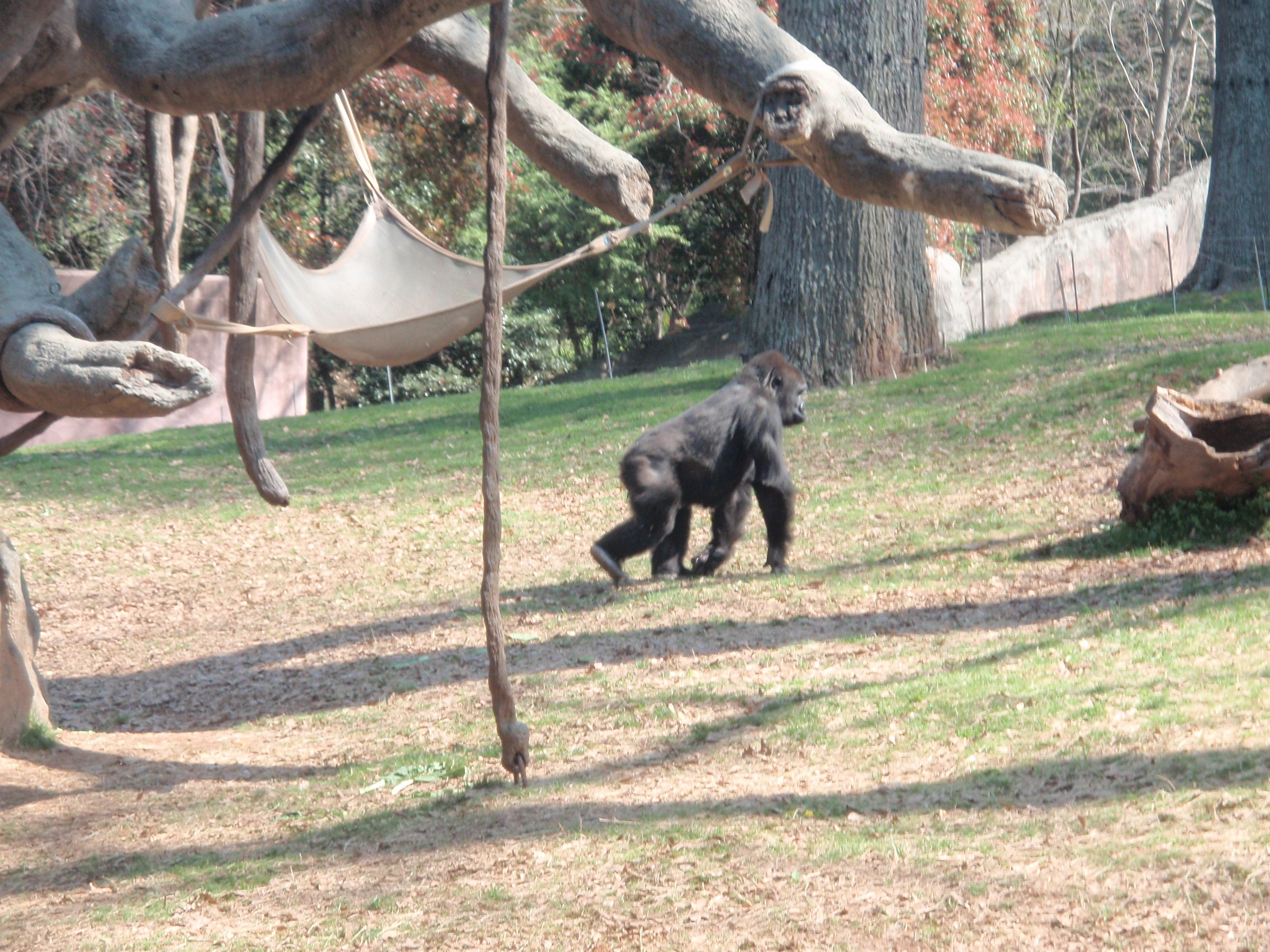 Atlanta Zoo Atlanta Zoo Animals My Travel