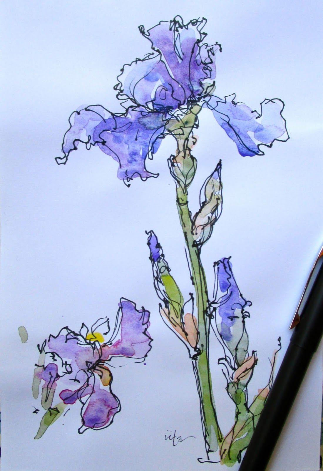 Iriscroppedg 10991600 pixels watercolors pinterest something there is about an iris and william carlos williams izmirmasajfo