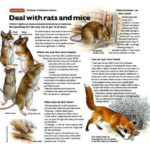 How To Get Rid Of Mice And Rats In Your House Getting Rid Of