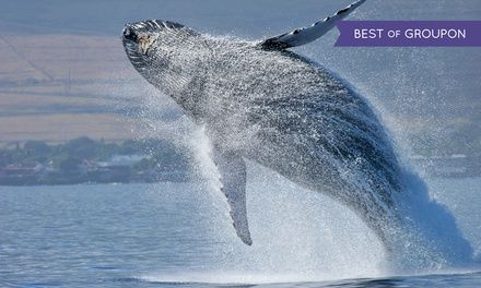 Groups gaze at humpback whales on a private tour