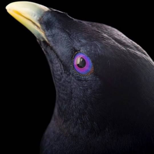 by Joel Sartore (avec images) | Exercices de style ...