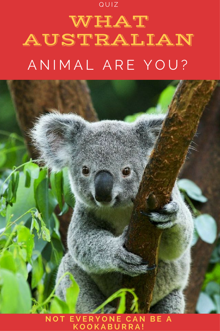 Which Australian Animal Are You Australian Animals Animals Cat Diseases
