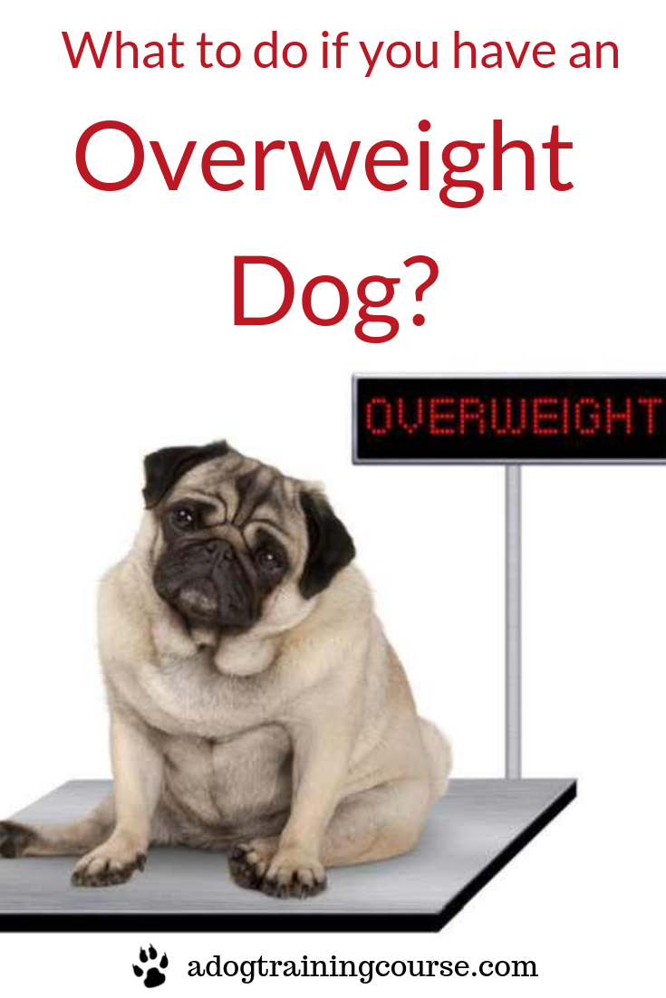 41c663fdcaed87568761b96b9a0c8e24 - How To Get My Overweight Dog To Lose Weight