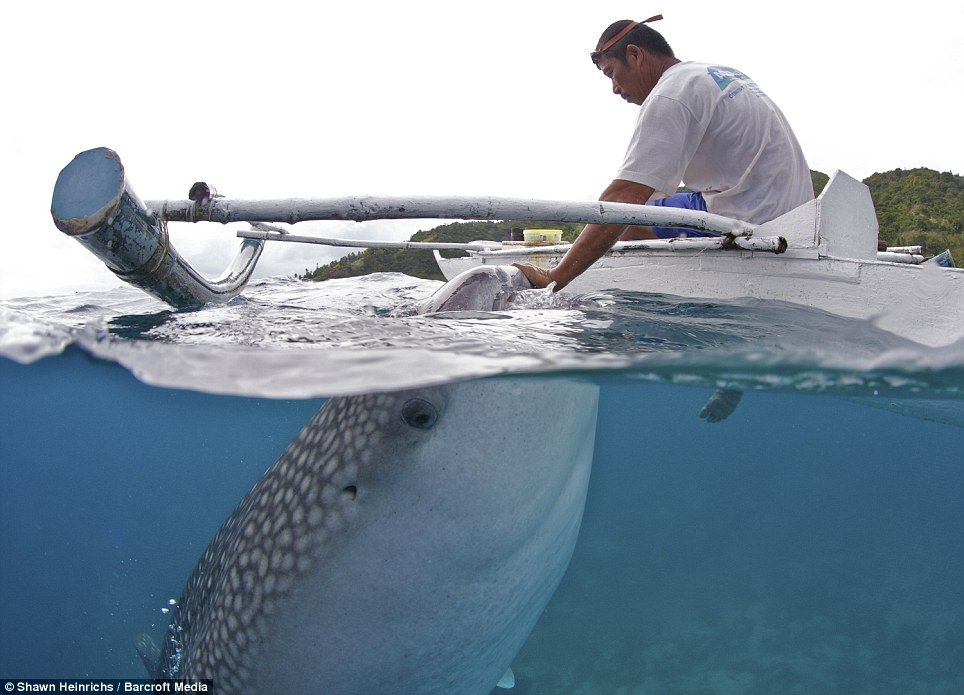 Jaws my friend! The touching relationship between a