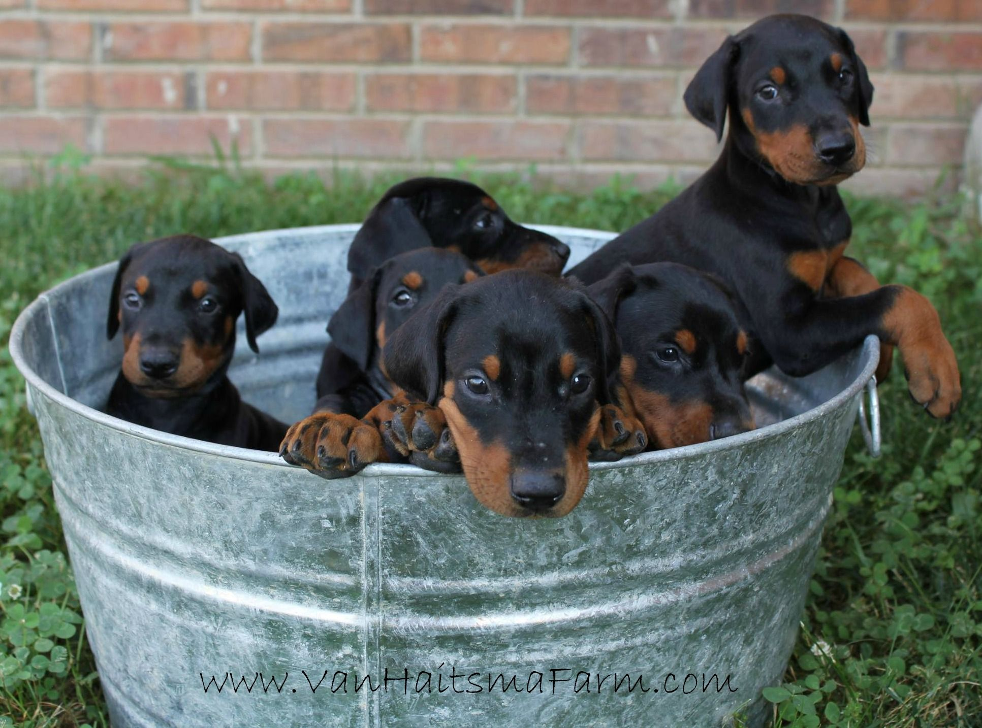 Bucket full of love - our precious European Pedigreed ...