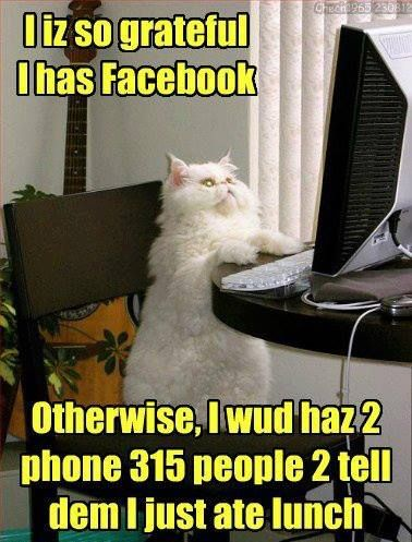 Facebook Funny Cat Pictures Funny Animals Cats