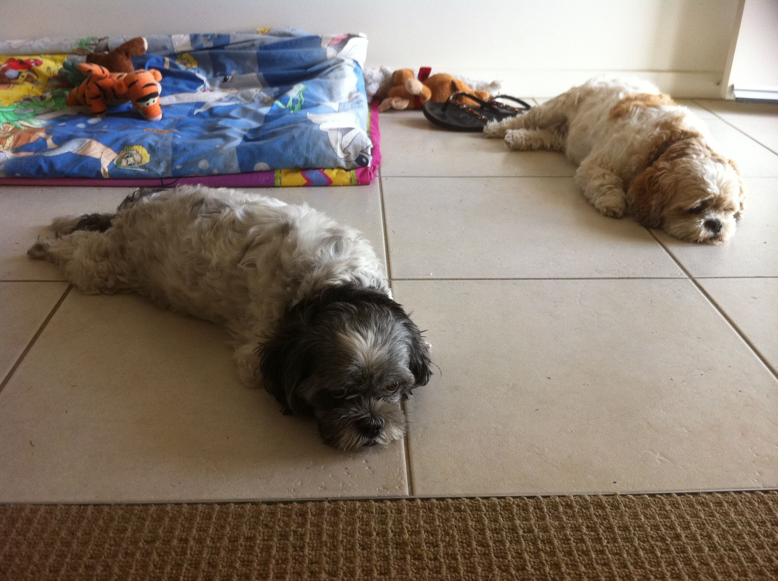 House sitting and Pet sitting can be so much fun. Here is a story of one of our favourite experiences.  http://www.totalhousesitters.com/1/post/2012/12/the-fun-of-pet-sitting-and-dog-sitting.html