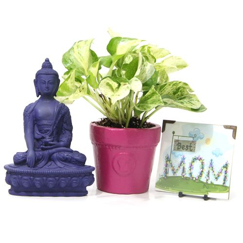 Looking Online Gift Shop To Send Gifts Hyderabad Visit GiftsbyMeeta For Special