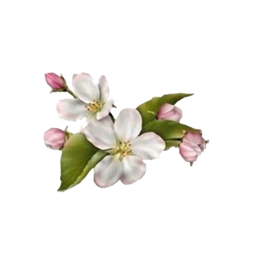 dogwood flower PNG Image 1024 × 1024 pixels Scaled 52%