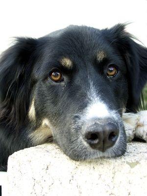 Negatives Of Starting A Dog Daycare Business