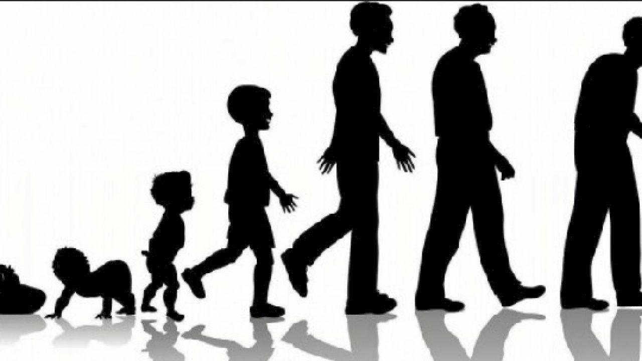 تعريف النمو Human Life Cycle Life Cycle Stages Life Cycles