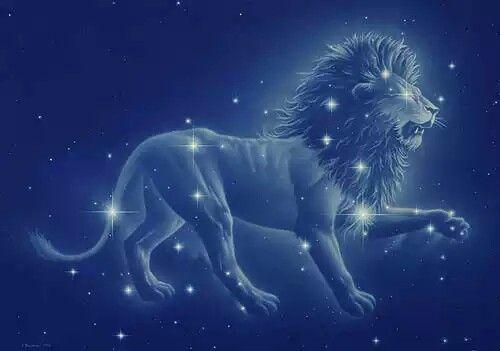 Leo Leo Lion Leo Constellation Leo Constellation Tattoo