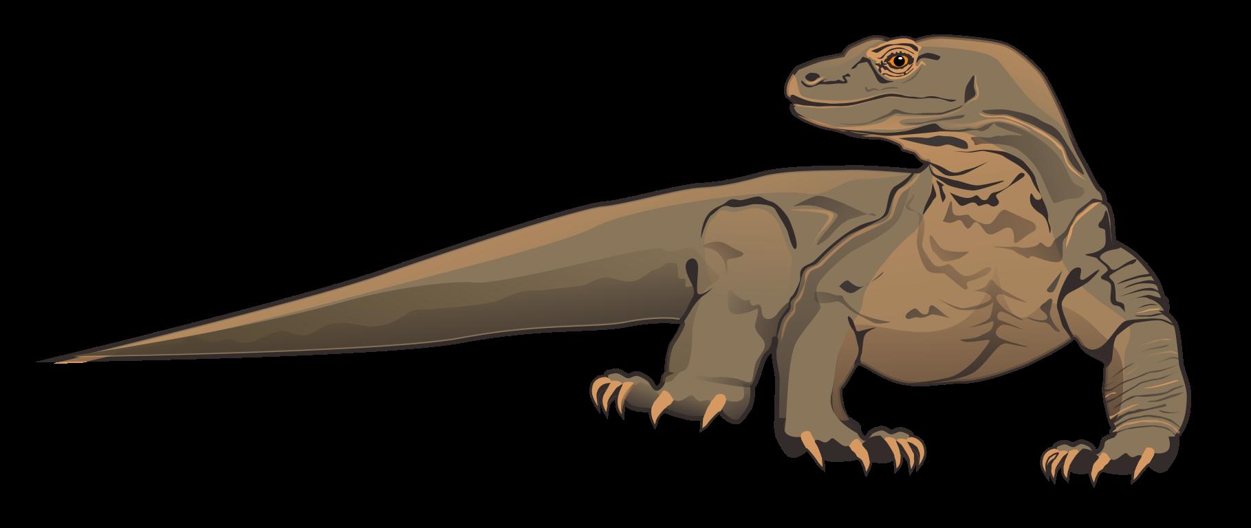 Картинки по запросу komodo dragon | Dragon | Pinterest