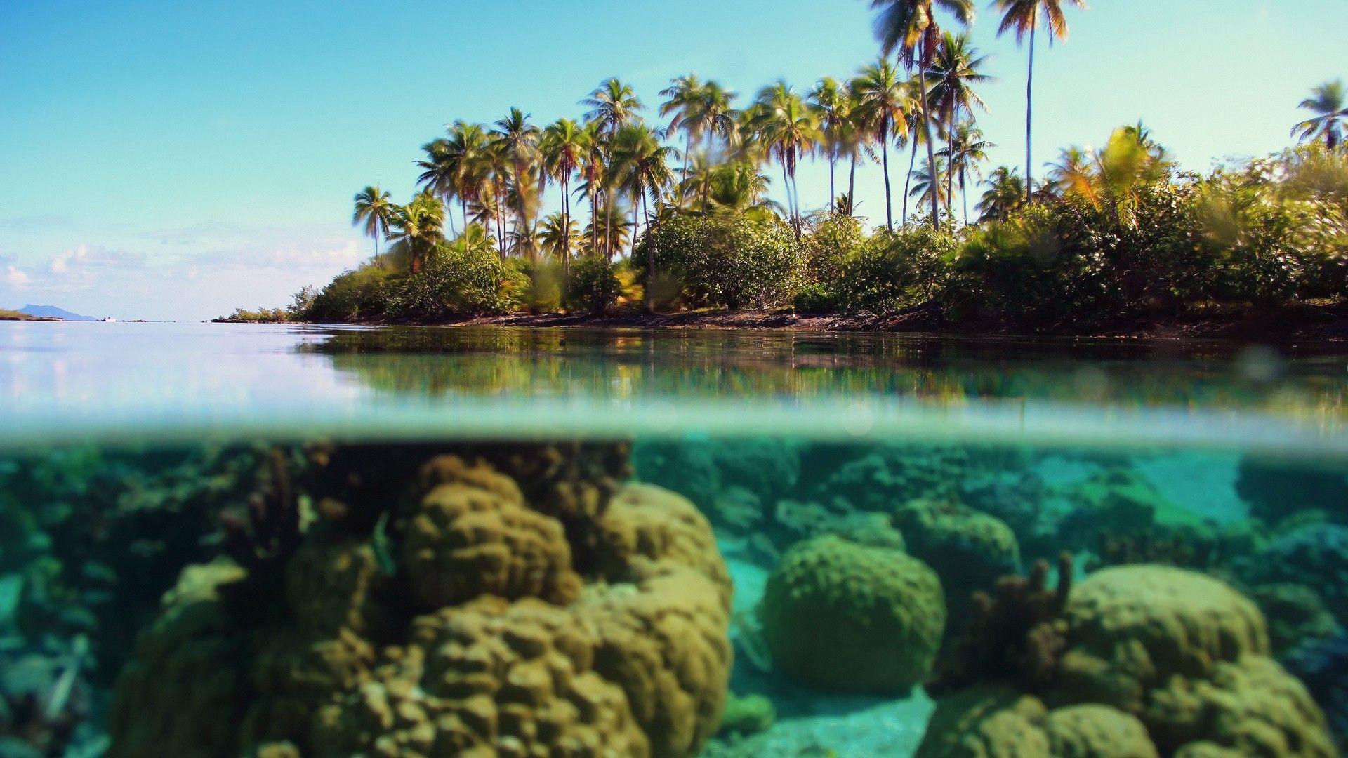 Bora Coral Amp Beaches