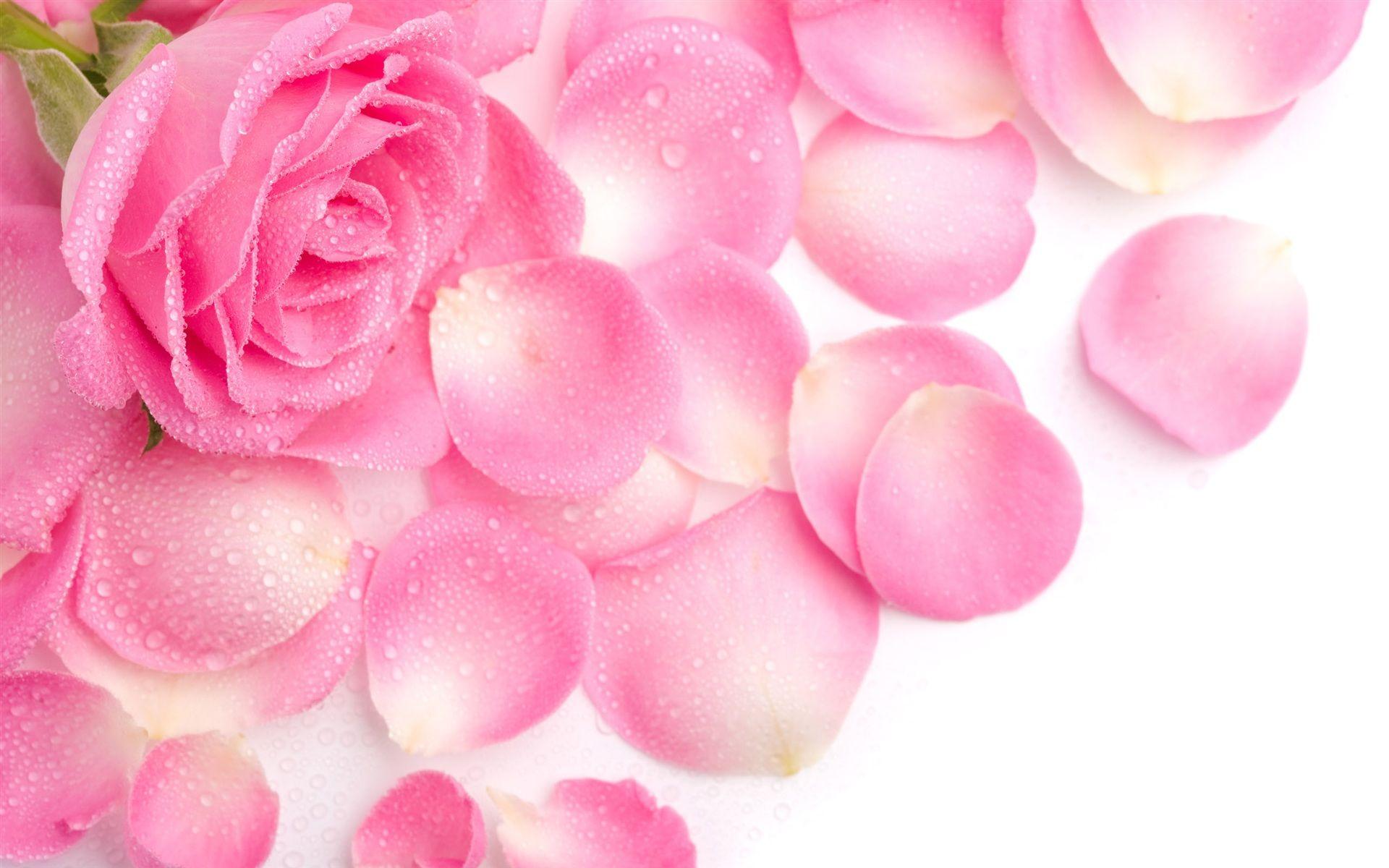 ピンクのバラの花びら 壁紙 1920x1200 バラ 花びら バラの花