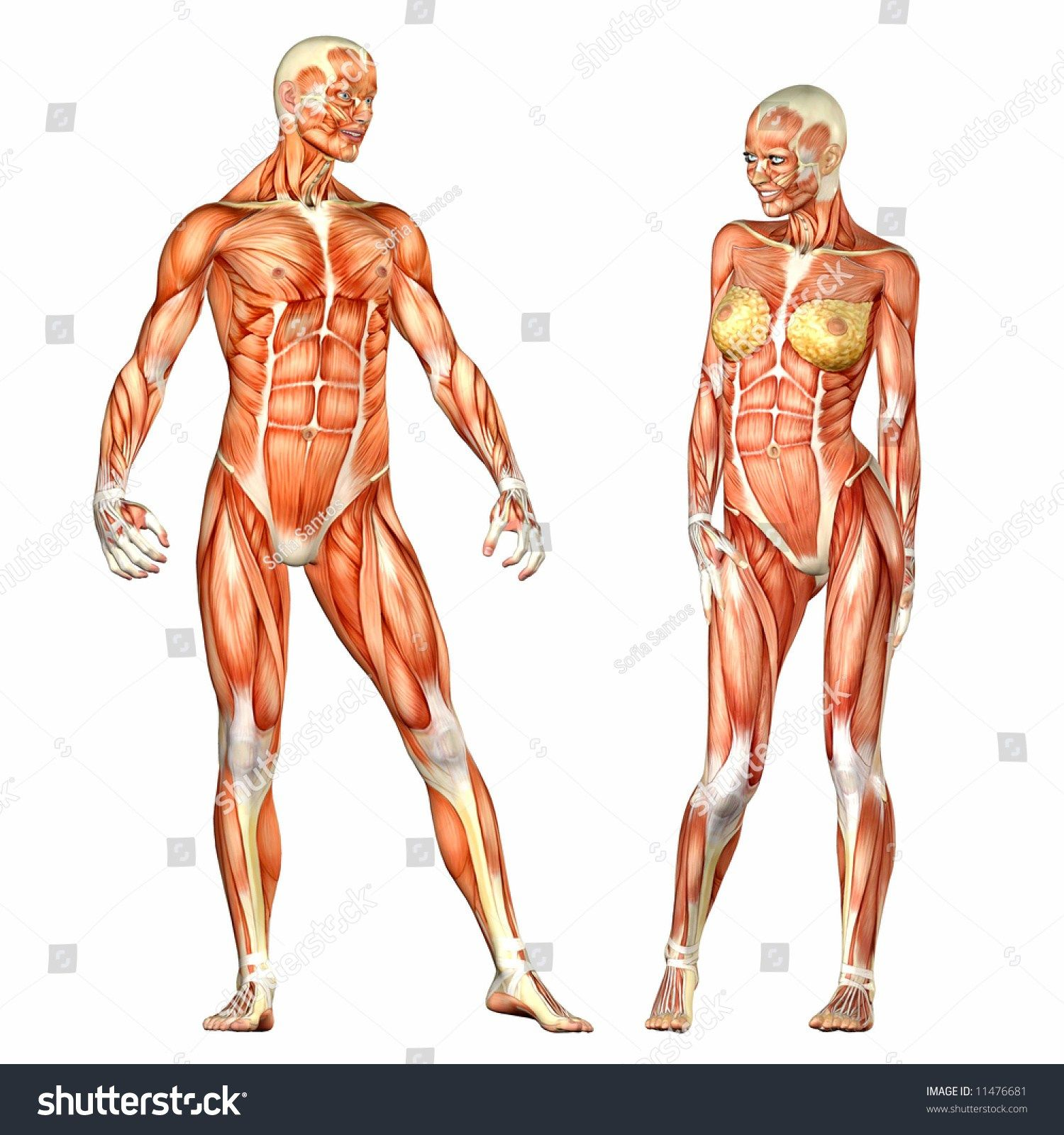 Pin On Human Anatomy Pictures