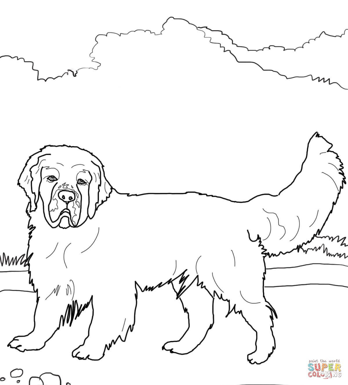 Clumber Spaniel | Super Coloring | Dog coloring book, Dog ...