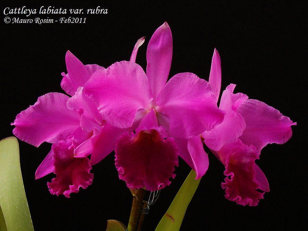 Resultado de imagen para mauro rosim photos orquídeas pinterest