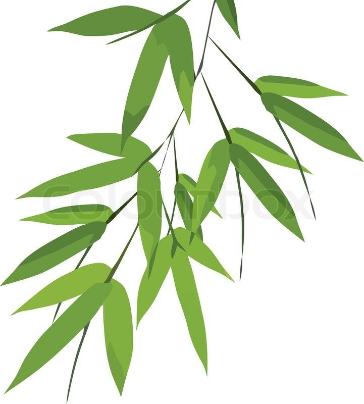 Bamboo leaves vector Vector