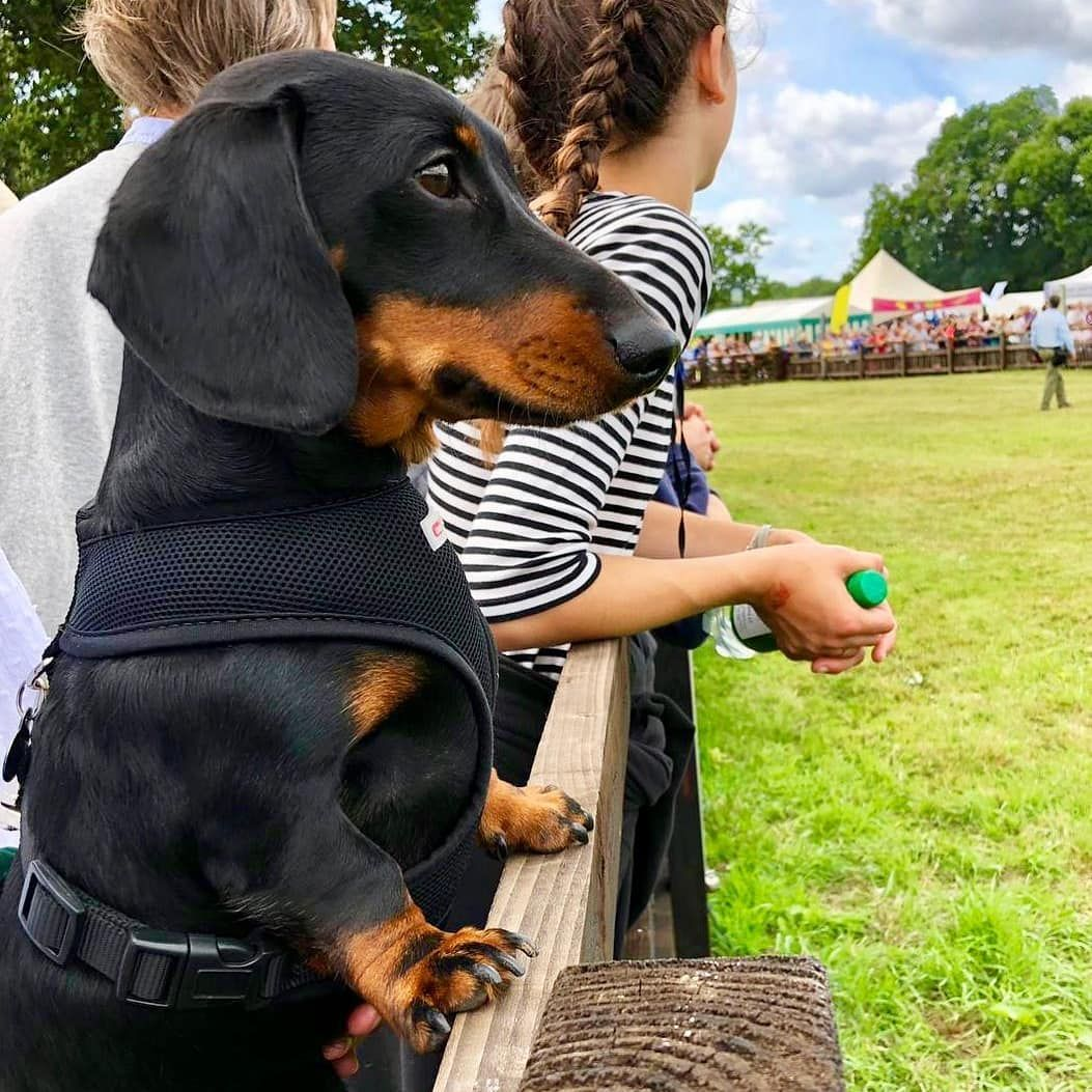 Credit freddietheminisausage hang out with us