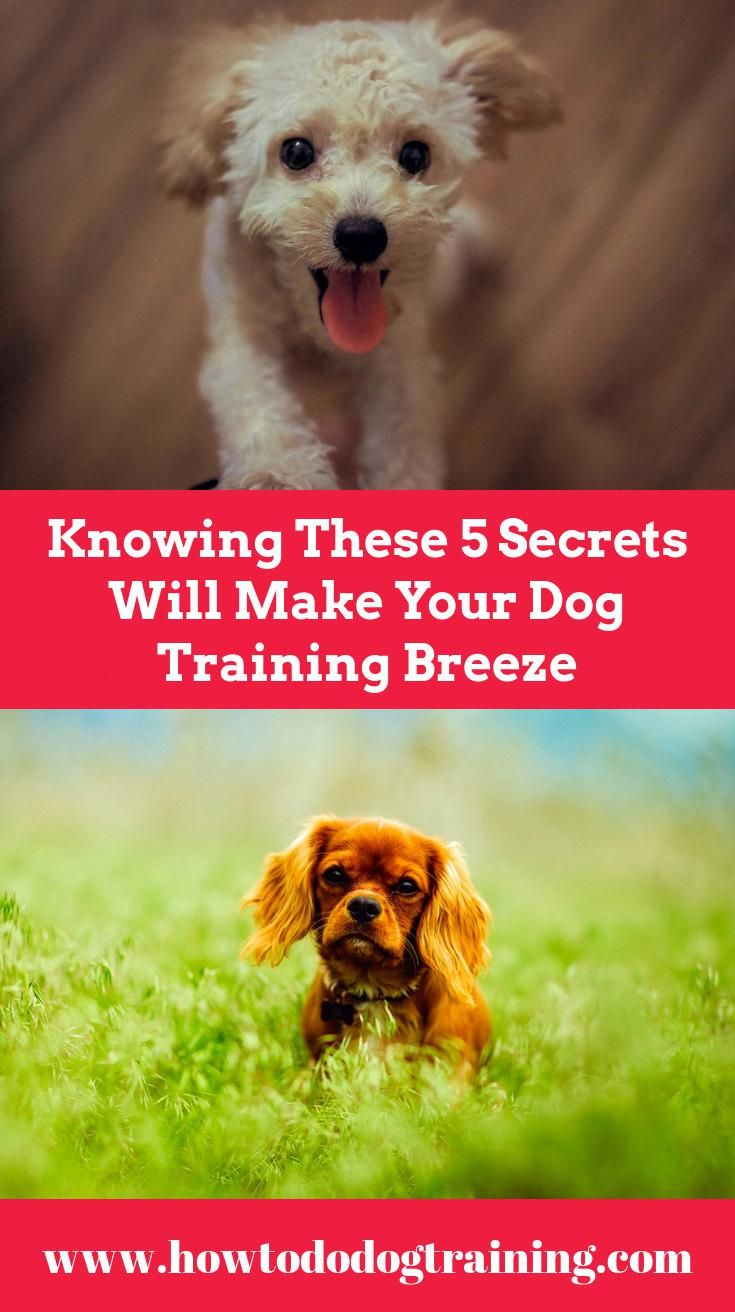 Need Aid With Pet Dog Training Look At These Ideas When Training
