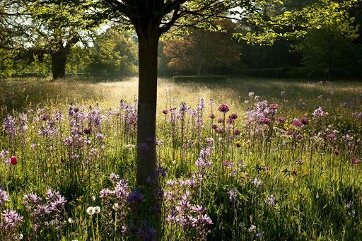 Photo of The Wild Flower Meadow