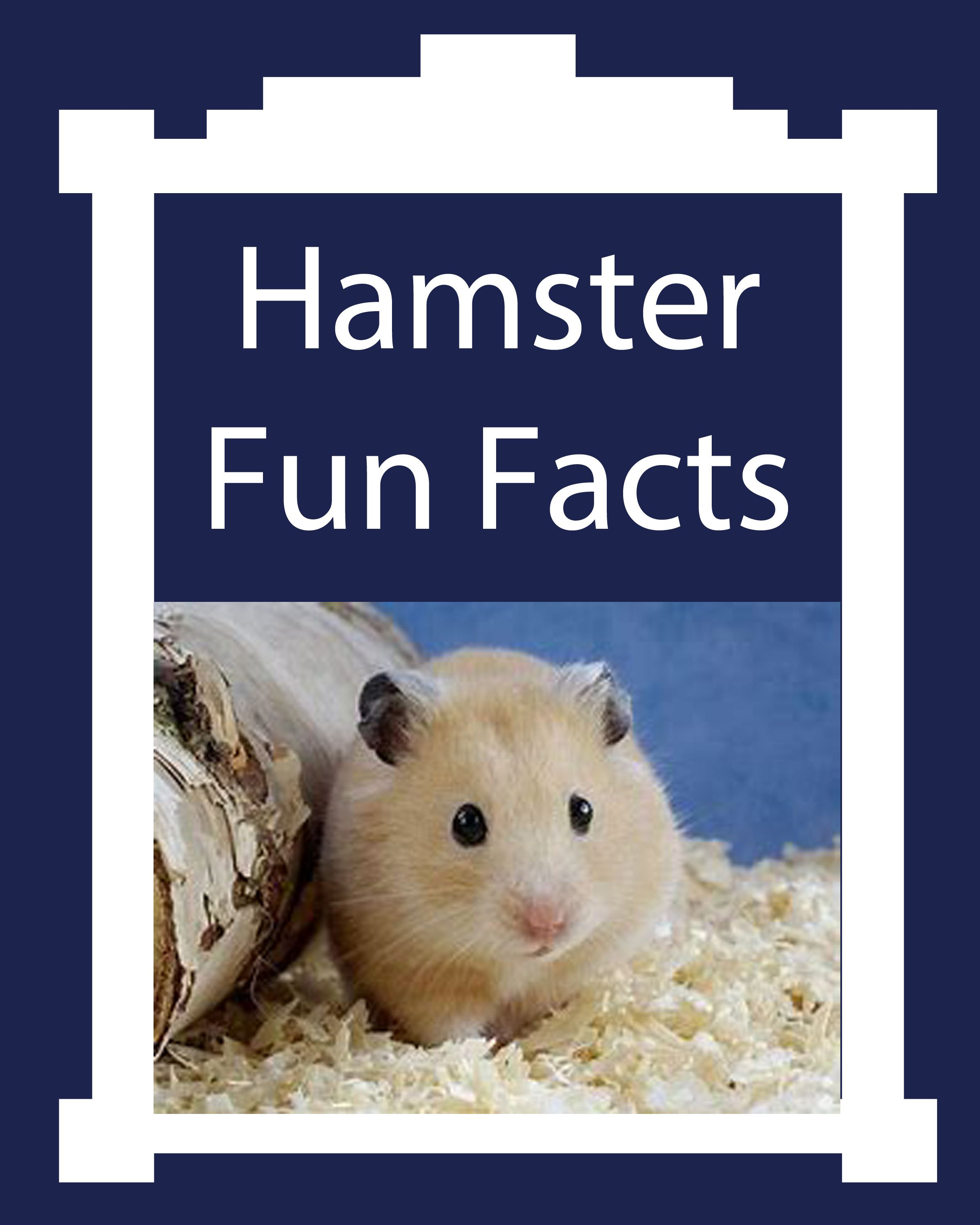 Hamster Fun Facts About These Tiny Pets In 2020 Fun Facts For