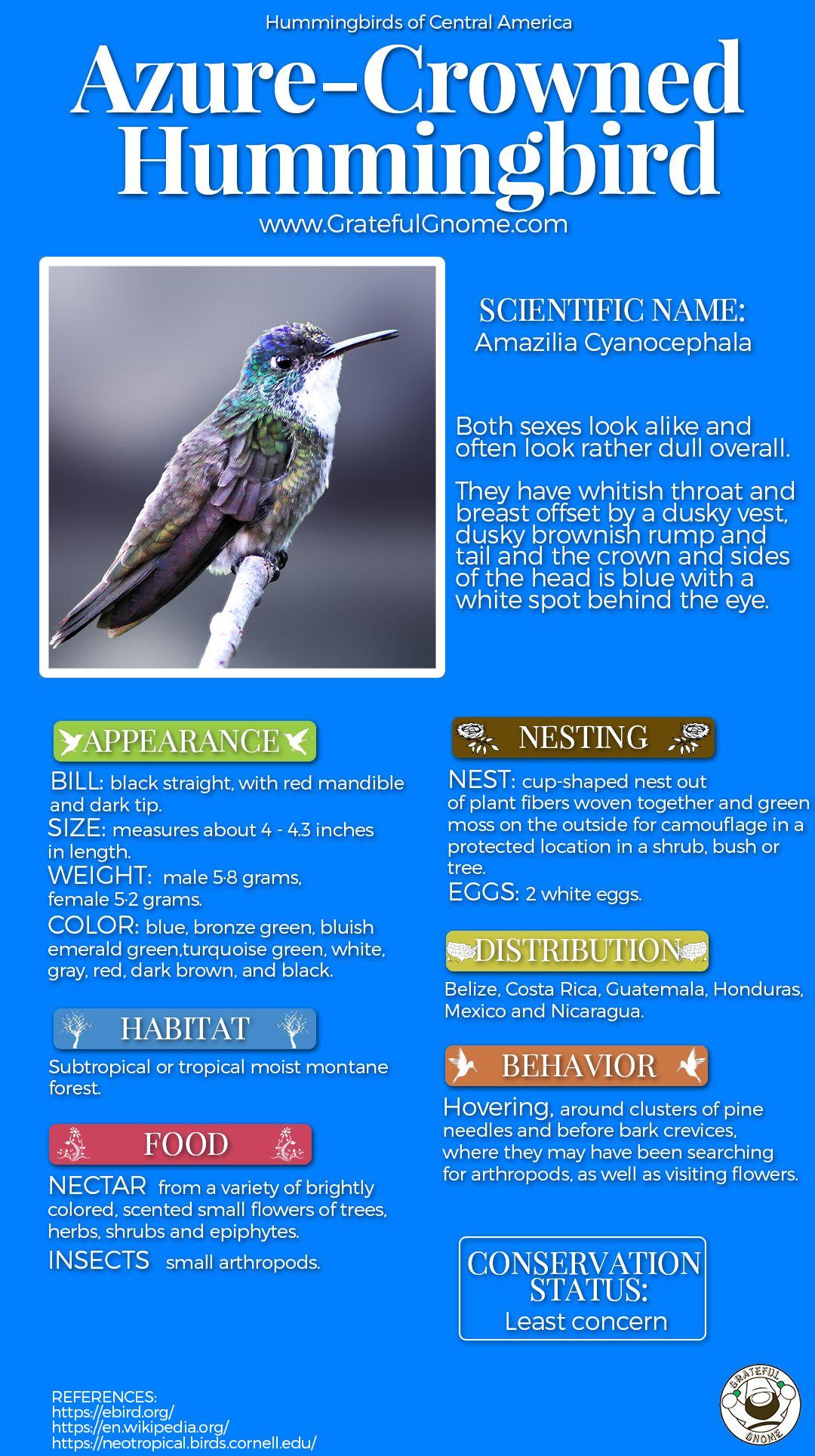 Hummingbirds Of Central America Azure Crowned Hummingbird Humming Bird Feeders Backyard Animals Pet Birds