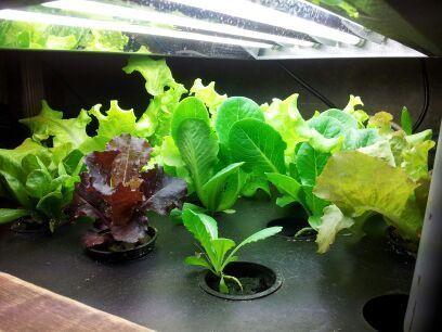 Aqua Botanical aquaponics system. aquabotanical.org # ...