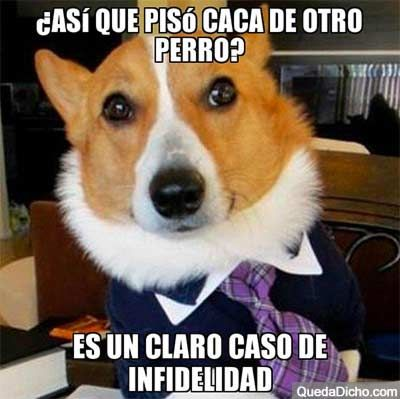 Memes Chistosos De Infieles Google Search Imagenes Divertidas De Animales Memes Divertidos Sobre Perros Memes Perros