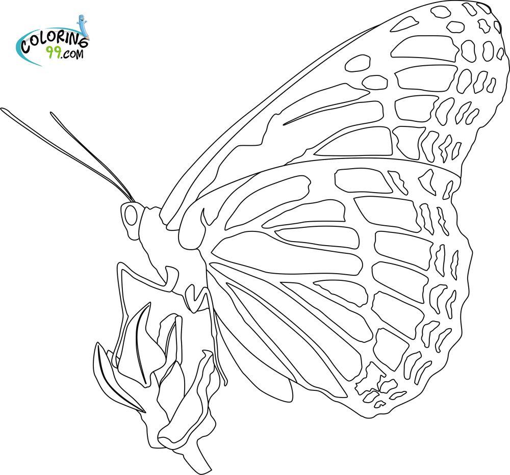 Monarch Butterfly Color Pages Qjfhrm | adult coloring | Pinterest ...