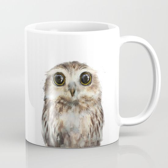 owl, baby owl, wild, wildlife...