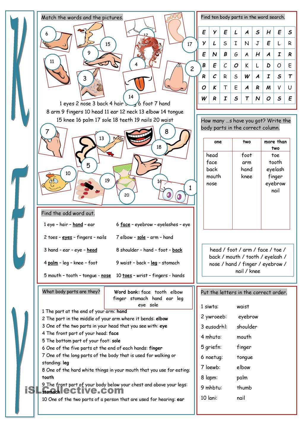 Parts of the Body Vocabulary Exercises | The body | Pinterest