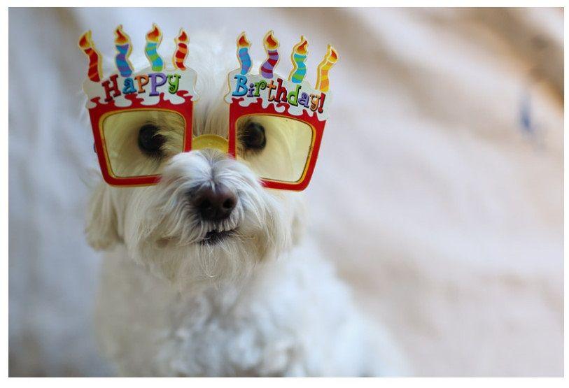 Happy Birthday Dog Images | Happy Birthday Dog Images