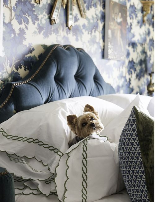 Your Yorkie pal keeping the bed warm