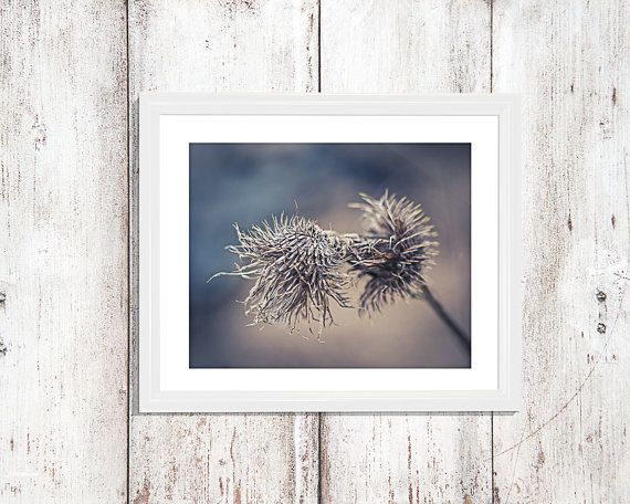 This is a close-up photograph bull thistle at the end of winter. I love the blue and brown colors. This would look great hanging in your home,