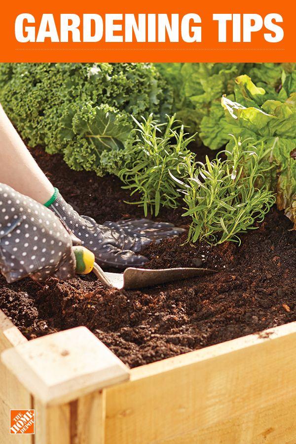 Garden Beds For Sale Home Depot