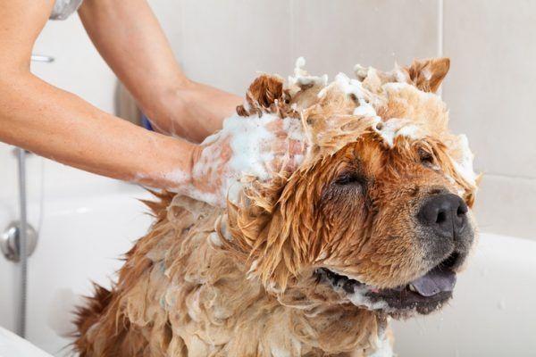 Hund oder Katze duschen Wann und wie geht es richtig