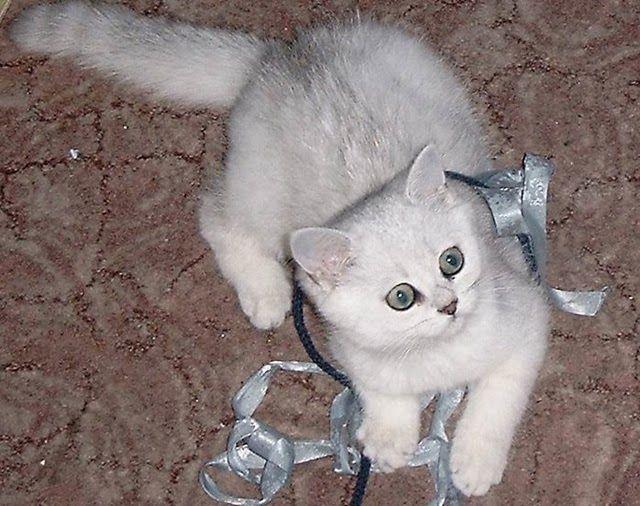 Vicio de Gato: Questões antes de ter um gato