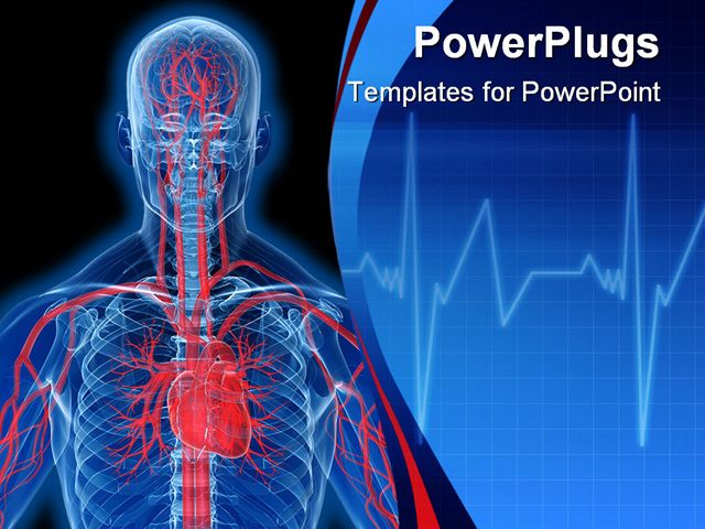 cardiac ppt template - powerpoint template about highlighted heart anatomy