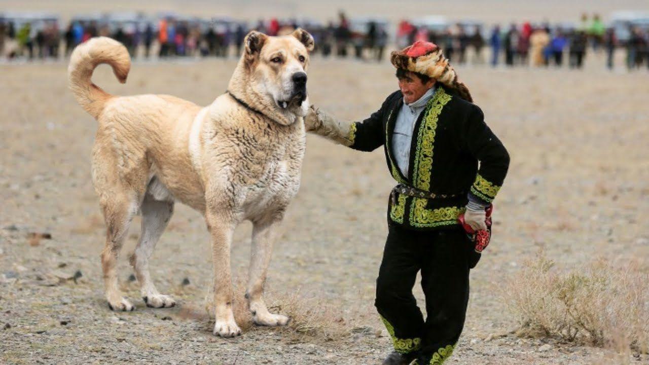 Top 10 Asian Dog Breeds Top 10 Asian Dog Breeds Asian Dogs Dog