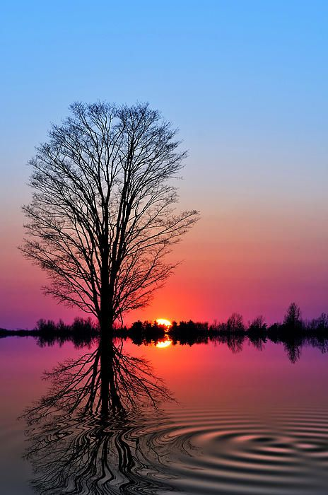 'The Tree Of Life' - a tree stands majestically at sunset during the Spring Equinox, March 20
