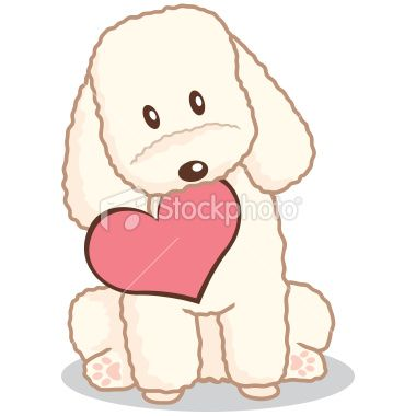 Toy Poodle With Heart Shape In Mouth Poodle Drawing