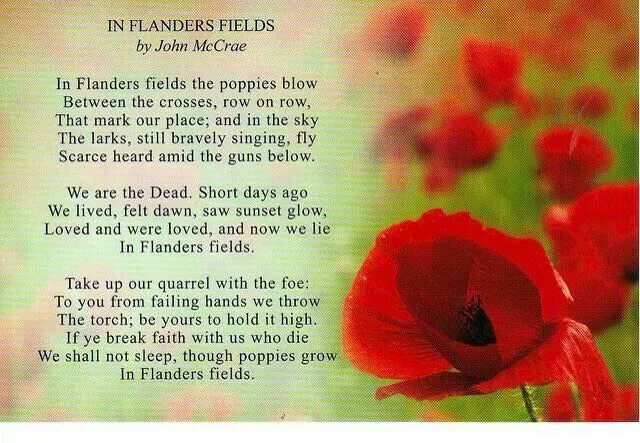 Pin By Dawn Bennink On History Flanders Field Poppies