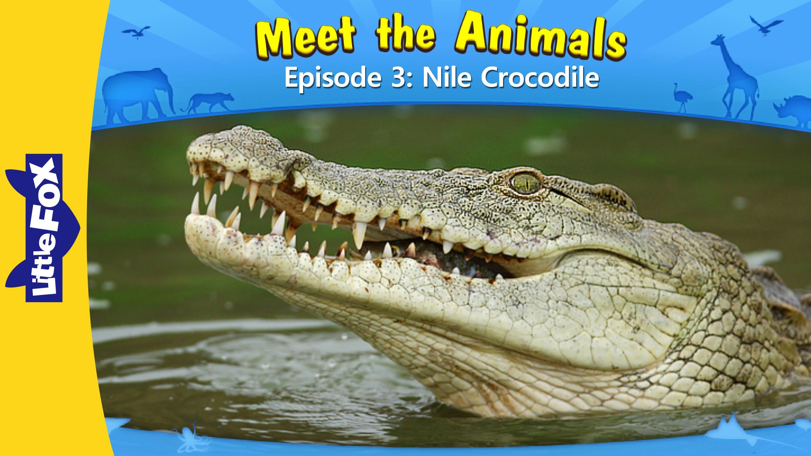meet the animals nile crocodile introduces kids to popular wild