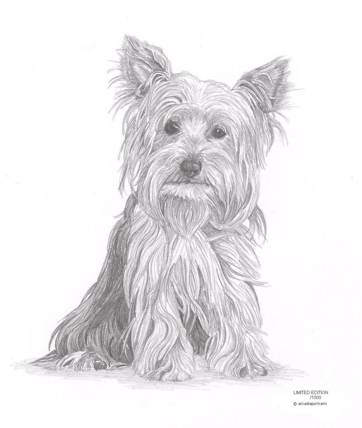 Yorkie 1 Dog Limited Edition Art Drawing Print Signed By Uk Etsy Dog Drawing Dog Tattoos Yorkshire Terrier