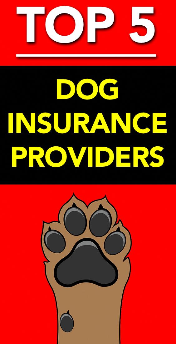 Best Pet Insurance Providers 3