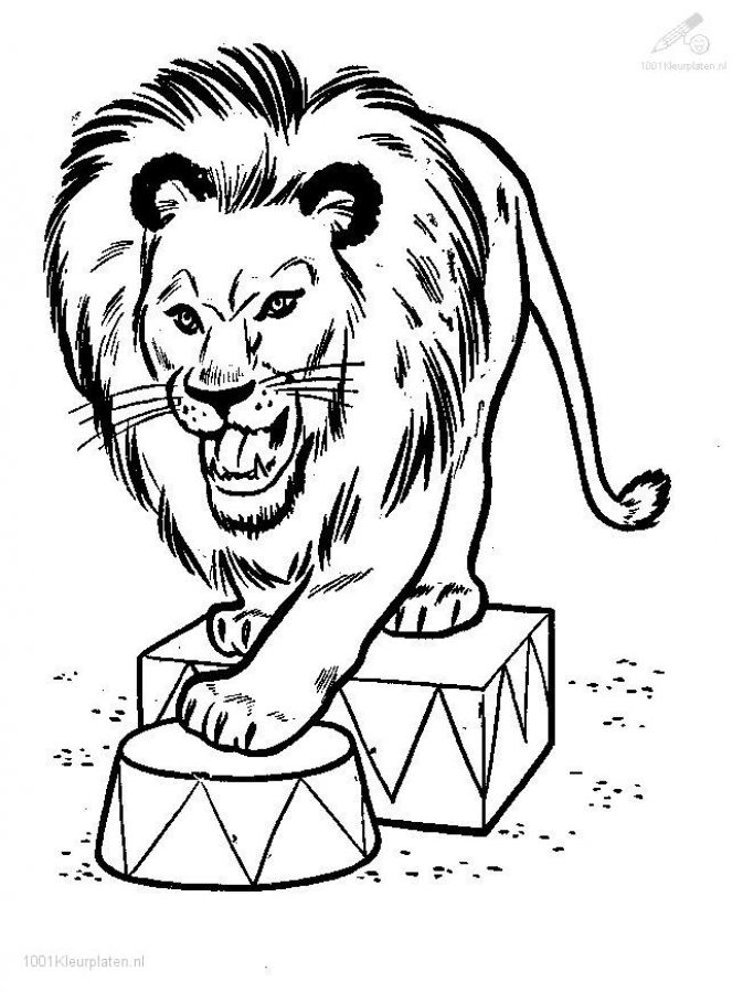 Detailed Lion Circus Coloring Pages For Older Kids Letscolorit Com Lion Coloring Pages Animal Coloring Pages Ninjago Coloring Pages