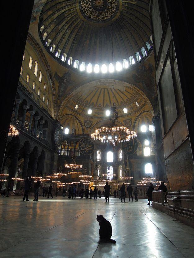 Watching Over His Flock Hagia Sophia Istanbul Cat Life