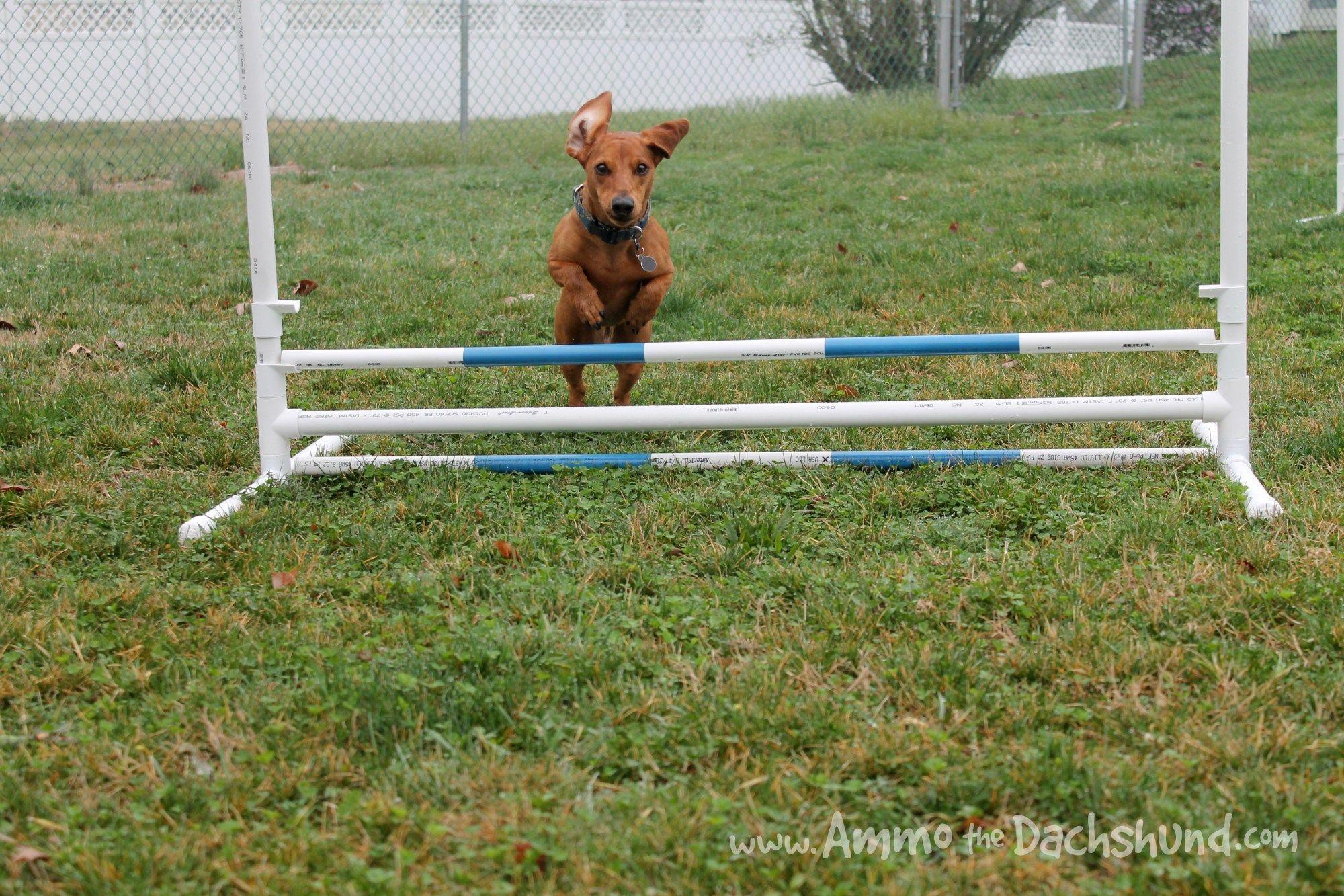 Dog Training At Home Tips Dogtraininglife 6848217495